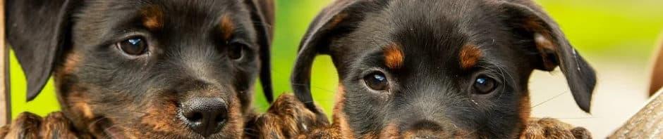 seguro de hogar daños perro