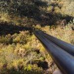 Lo que debes saber sobre el seguro obligatorio de caza