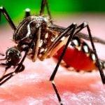 Sobre las Olimpiadas de Río 2016, el virus del Zika y la sanidad en Brasil