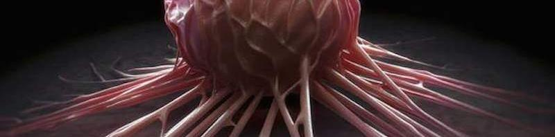 Así es como el tejido graso desvía energía a los tumores