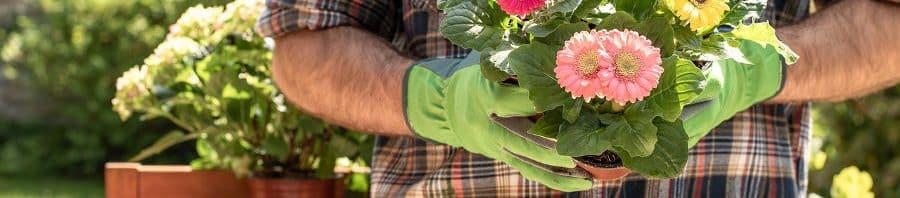 Alegra tu vida con flores - La jardinería mejora tu salud física y mental