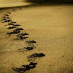 10 cosas que le suceden a tu cuerpo si caminas todos los días