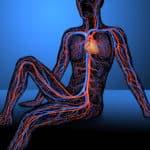 Crecimiento de los vasos sanguíneos, clave para el tejido graso sano