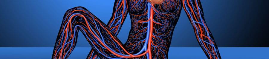 Crecimiento de los vasos sanguíneos clave para el tejido graso sano