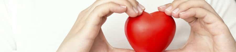 El intestino puede ser la clave para la salud cardiovascular