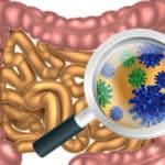 ¿Podrían las bacterias intestinales hacer más agresivo el cáncer de mama?