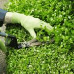La jardinería es buena para la salud, ¡descubre por qué!