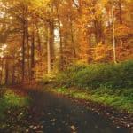 Pasar dos horas a la semana en la naturaleza es bueno para la salud